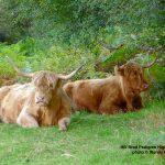 Slow Food Ark of Taste in Scotland